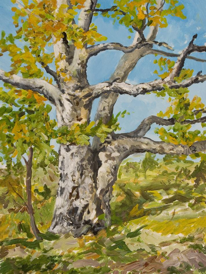 Backyard Birch