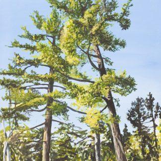 Two Giant White Pines