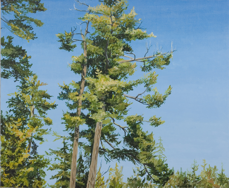 Big Pine and Sky