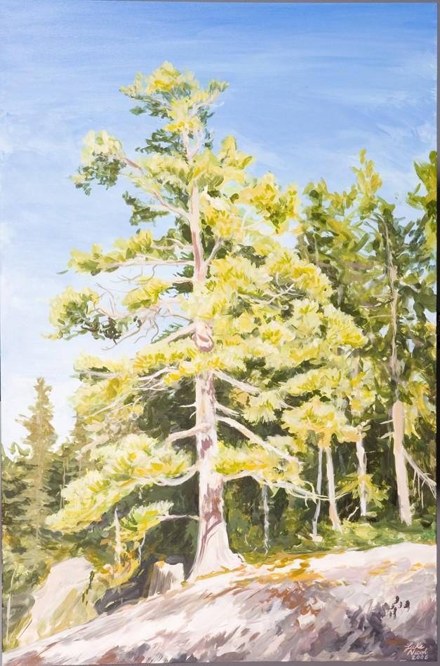 Quetico Pine