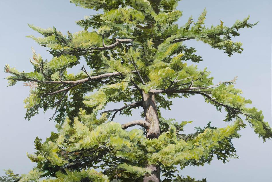 Northern Pine