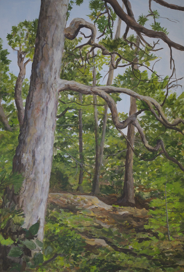 Quetico Red Pine
