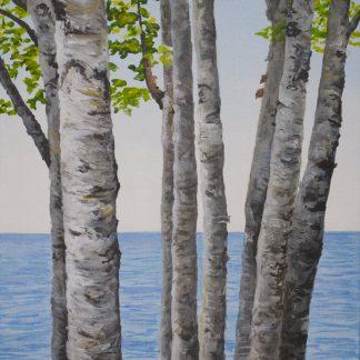 Superior Birch